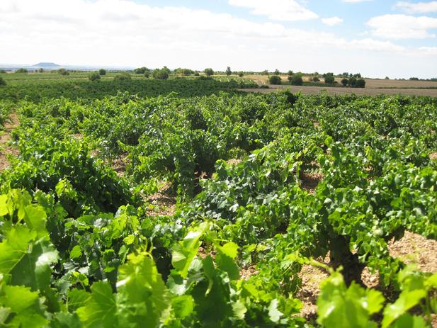 Noticias del vino del n 91 revista oficial de la feae - Tanatorio valdepenas ...